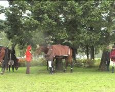 Horsemen and horses II in the rain Stock Footage