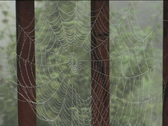 Spider-web II Stock Footage