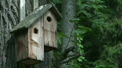Double nesting-box in a forest Stock Footage