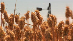 Wheat with windmill - stock footage