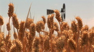 Stock Video Footage of Wheat with windmill