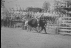 Man rides steer at rodeo-From 1930's film - stock footage