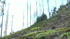 Deforestation - stock footage