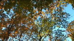 NY upstate woods autumn foliage tilt-down Stock Footage