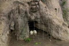 Bones of the baobab tree Stock Footage