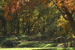 FallingLeaves1 NS DV NTSC Stock Footage