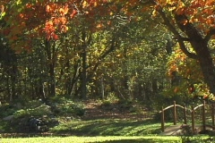 FallingLeaves3b NS DV NTSC Stock Footage