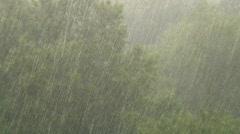 rain trees - stock footage