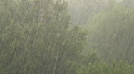 Stock Video Footage of rain trees