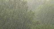 Rain trees Stock Footage