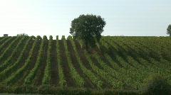 WineYard Stock Footage