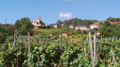 Vineyard, Galicia, Spain Stock Footage
