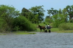 Horse with passangers through marsh Stock Footage