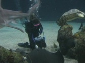 Diver with Turtles, Sharks, Fish & Stingrays Stock Footage