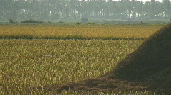 Pile of grass from rice harvesting in Philippines Stock Footage
