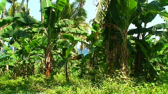 Tropical forest on the island oriental Mindoro in the Philippines - stock footage