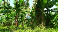 Stock Video Footage of Tropical forest on the island oriental Mindoro in the Philippines