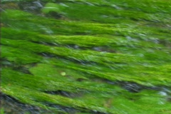 Weed under water Stock Footage