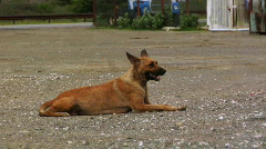 Stray dog Stock Footage
