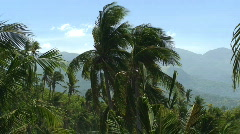 Coconut Trees Cocos nucifera with mountain in the background in the Philippines Stock Footage