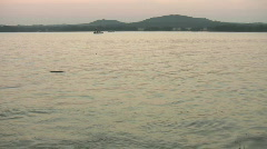 Dog retrieving stick in lake at sunset HD Stock Footage