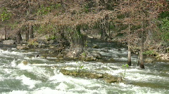 River fast flow through cypress trees HD Stock Footage