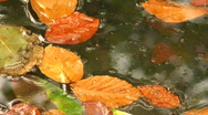 Raindrops falling onto colorful autumn leaves Stock Footage