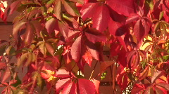 Autumn colors 26 Stock Footage