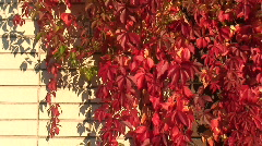 Autumn colors 23 Stock Footage