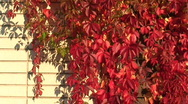 Stock Video Footage of Autumn colors 23