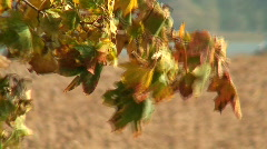 Autumn colors 20 - stock footage