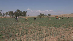 Ethiopia: People work in field Stock Footage