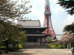 Tokyo Tower and Zojo Temple Stock Footage