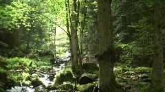 Creek in a green forest Stock Footage