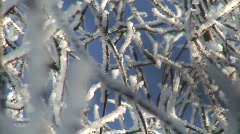 Branches covered by frost near river 4 Stock Footage
