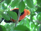 Stock Video Footage of Pretty Bird