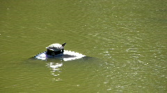 Turtle on tire in pond HD Stock Footage