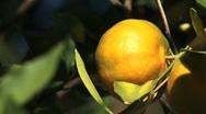 Orange 01 Stock Footage