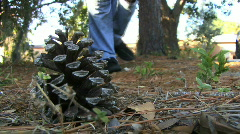 A Pine Cone On The Ground - stock footage