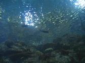 Underwater Stock Footage