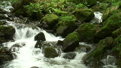 Panshot  of a mountain creek Stock Footage