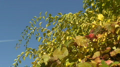 Autumn colors 5 Stock Footage