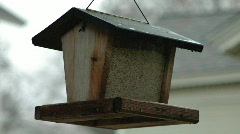 BirdFeeder - stock footage