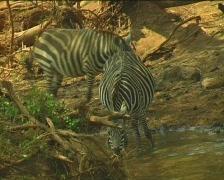 Kenya Wild Animals - stock footage