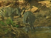 Kenya Wild Animals Stock Footage