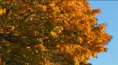Upstate New York fall leaves Stock Footage