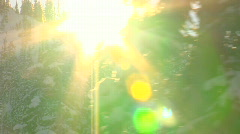 Sun shining through moving trees HD - stock footage