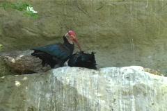 Rare Bird Stock Footage