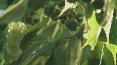 Water drop berrys Stock Footage