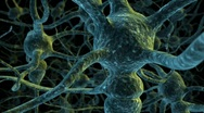 Neuron cell network flight through Stock Footage